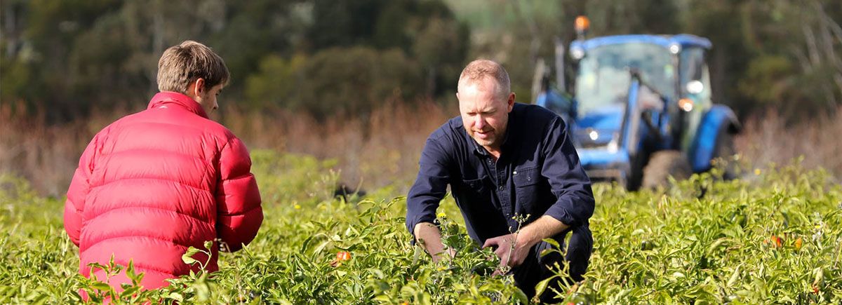 Organic farmers inspecting a certified organic field crop